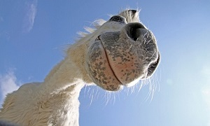 Horse Betting App